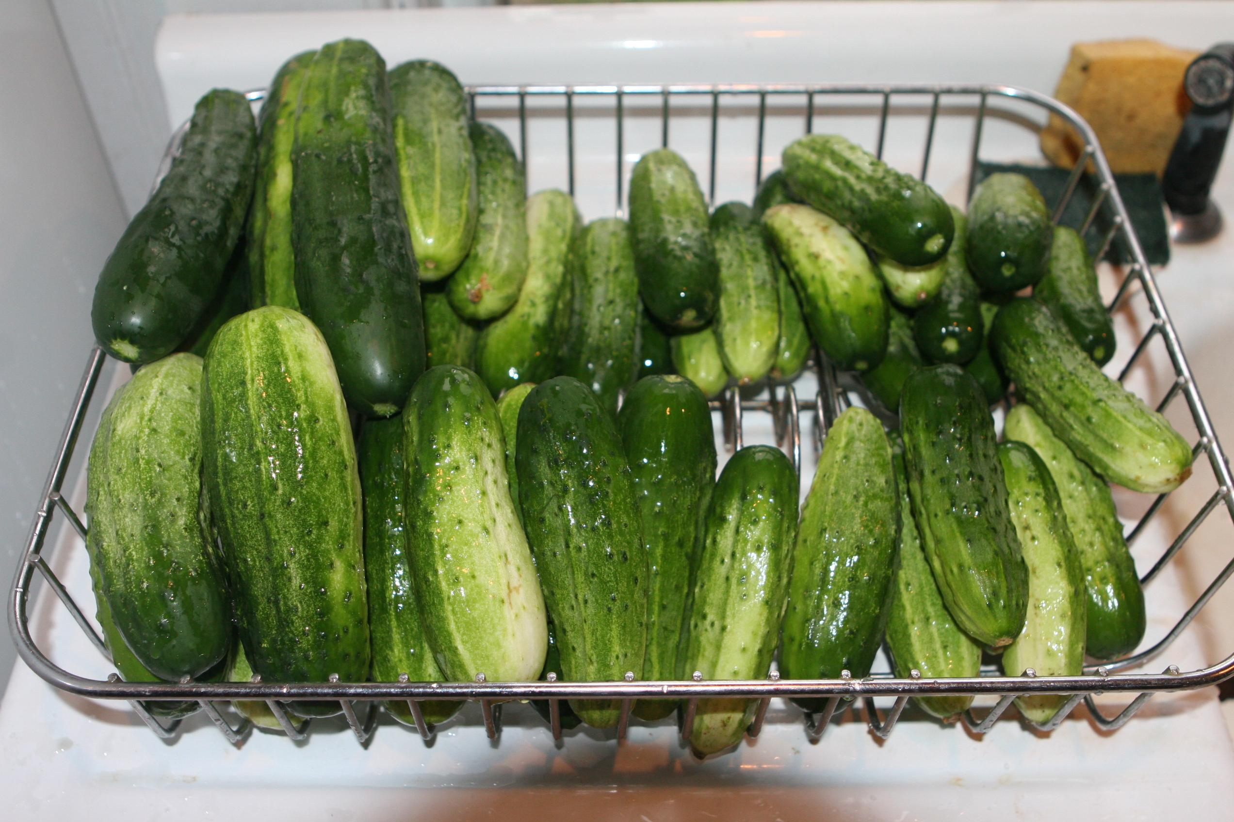 Cucumbers were next--lots of 'em